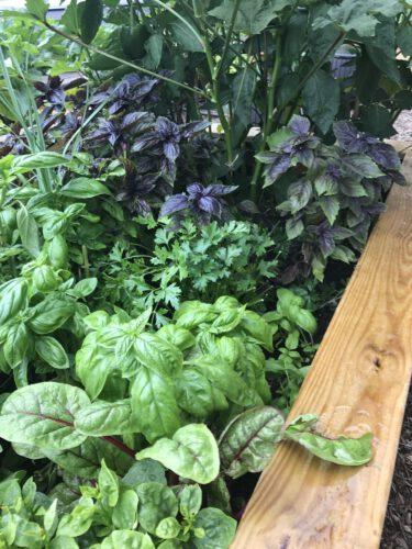 Patrick Bonck Schermerhorn Garden 2 Preview